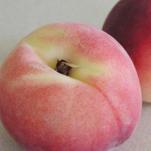 Peach yellow - pack of 3