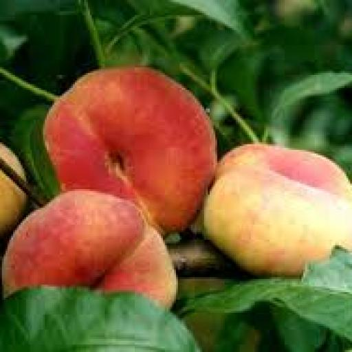 Peaches, Flat White - pack of 3
