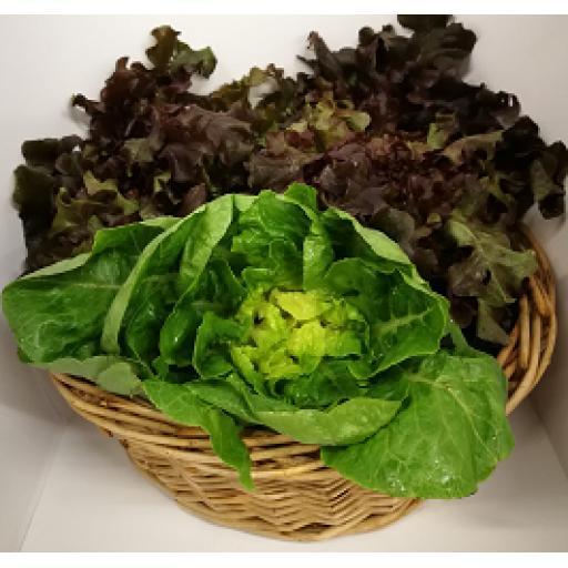 Trinity Farm Lettuce - Per head
