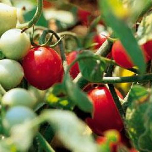 Tomato, Beefstake - 350g