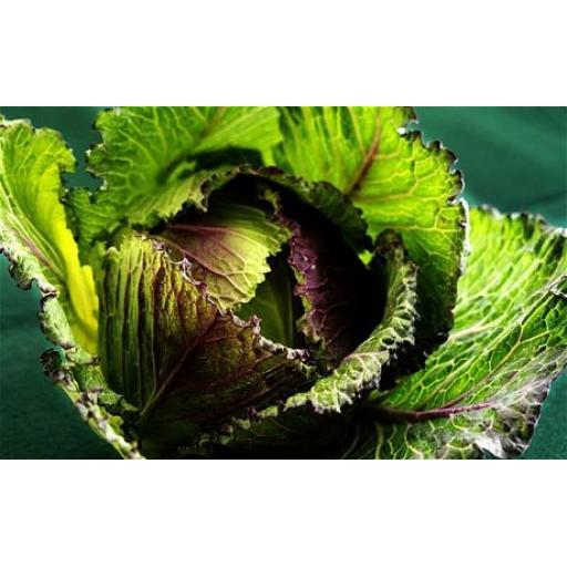 Cabbage, Jan King - Individual