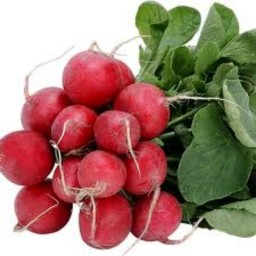 radish-bunch-trinity-farm-533-p.jpeg