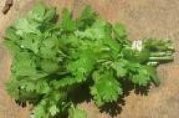 parsley-flat-leaf-404-p.jpg