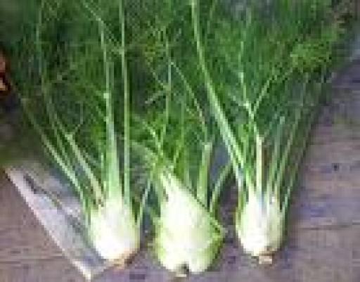 fennel-trinity-farm-400-500g-489-p.jpg