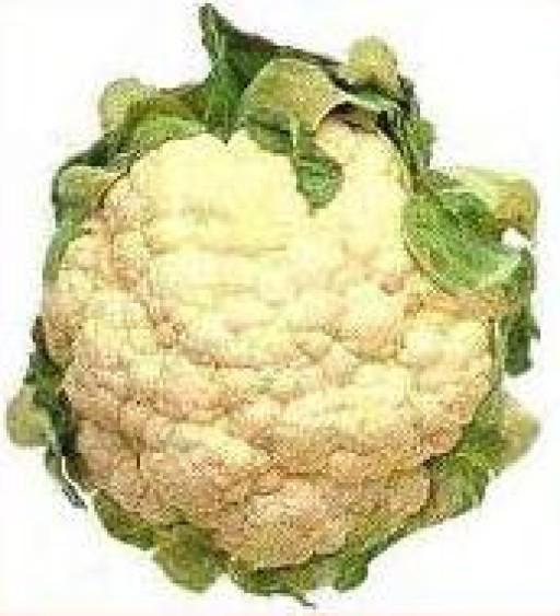 cauliflower-individual-488-p.jpg