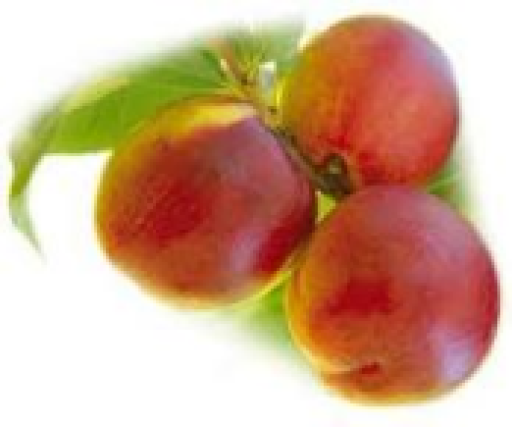 nectarines-classic-yellow-each-502-p.png