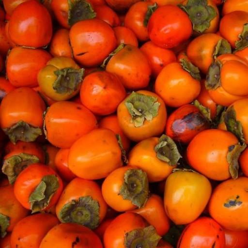 kaki-sharon-fruit-large-individual-1335-p.jpg