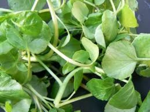 watercress-100g-532-p.jpg