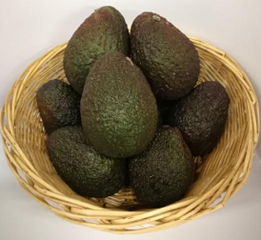 avocado-individual-83-p.png