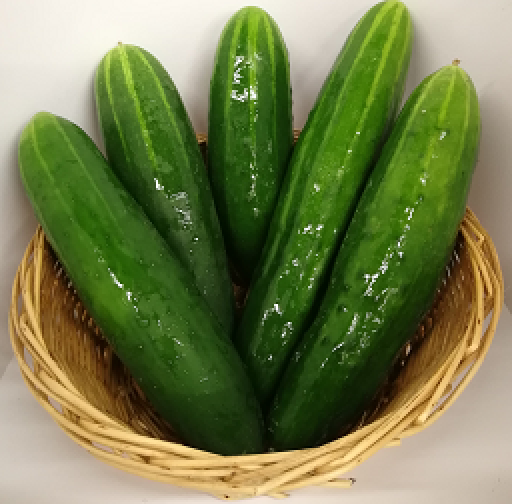 cucumber-noah-short-individual-1319-p.png