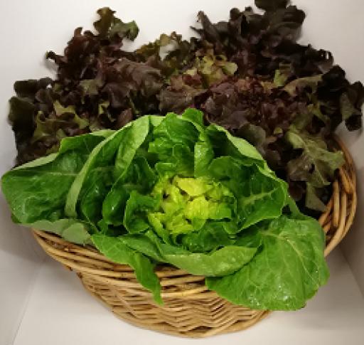 trinity-farm-lettuce-per-head-482-p.png