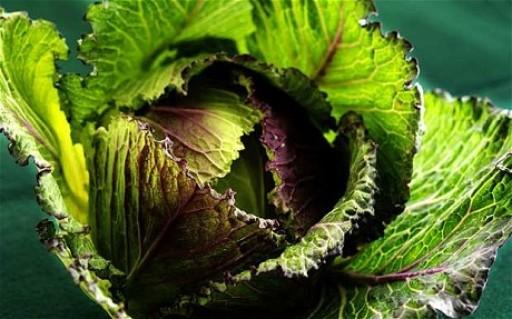 cabbage-jan-king-individual-1459-p.jpg