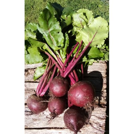 Beetroot, Bunch - approx 500g