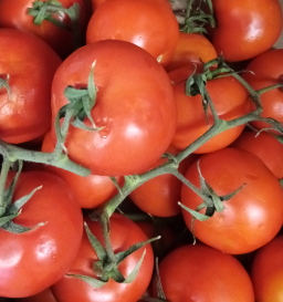 Large Vine Tomatoes.png