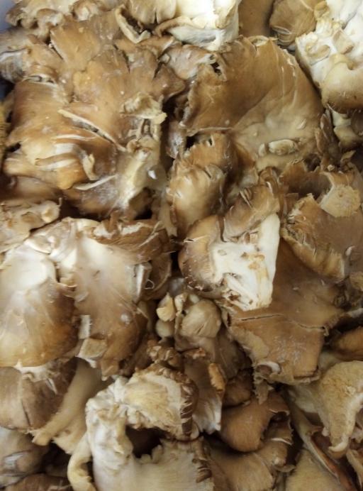 Oyster Mushroom.png