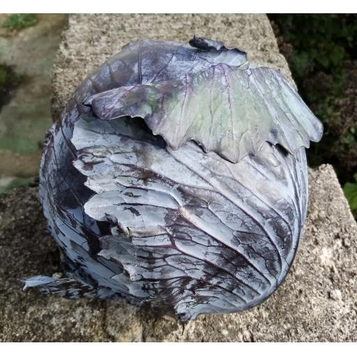 Cabbage, Red - individual - approx 1kg