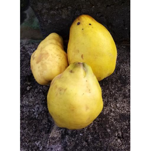 Quince - 500g