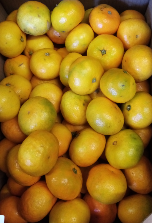 Clementines.png