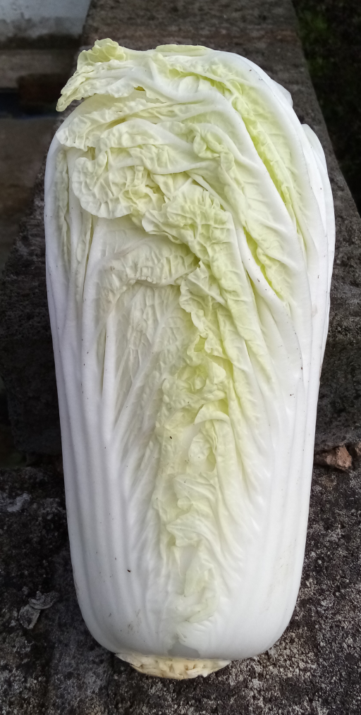 Chinese Leaf Cabbage.png