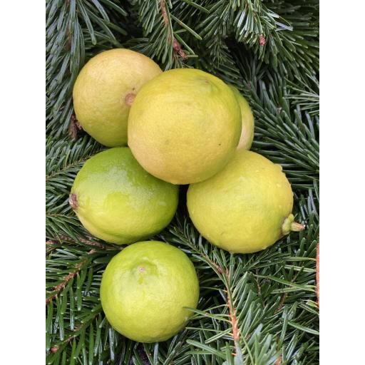 Limes - Pack of 3 - approx 250g