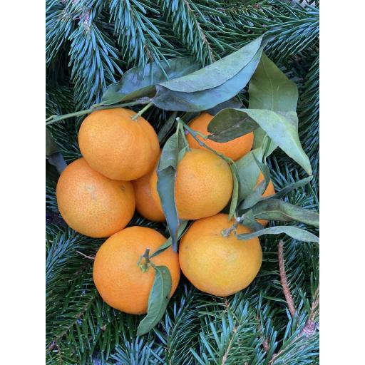 Clementines - 500g