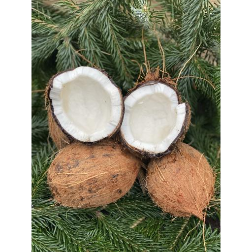 Coconut - Individual