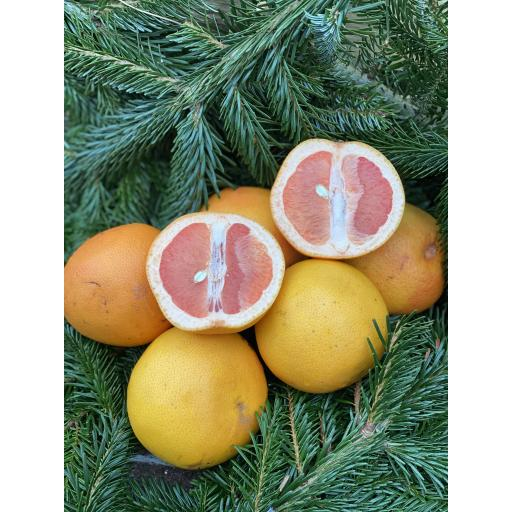 Pink Grapefruit - pack of 2 - weekly