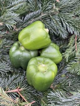 Green Peppers.jpg