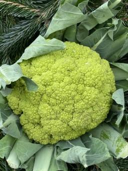 Green Califlower.jpg