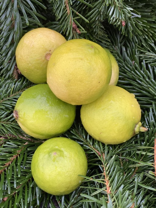 Lemons Bergamots.jpg