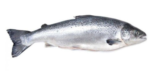 Whole Salmon.png