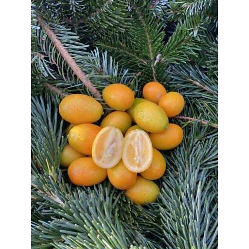 Kumquat - 200g
