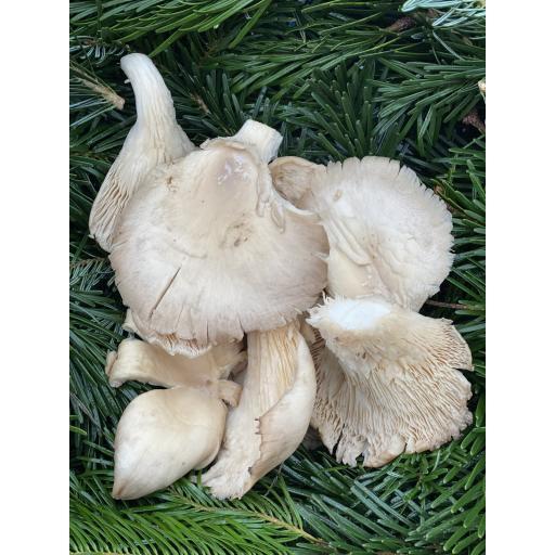 Mushrooms, Oyster - 200g