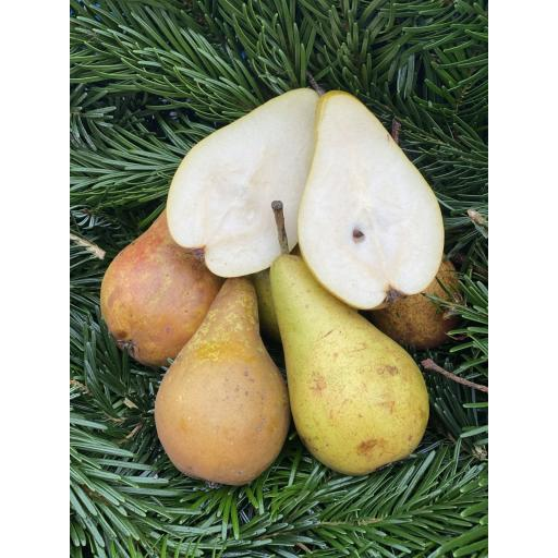 Pears - Conferrence (Large) - 500g