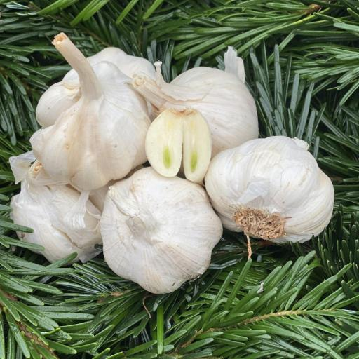 Garlic, Dried - pack of 3 - approx 100g