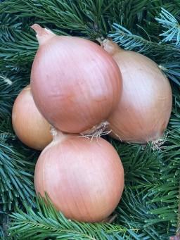 Big White Onion.jpg