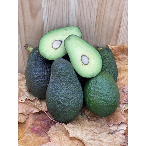 Avocado Large - Individual - Approx 200g - Weekly