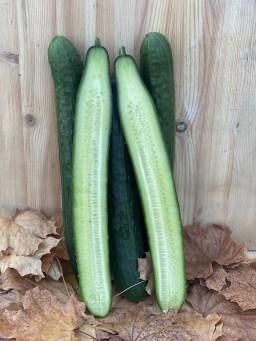 Cucumber long.jpg