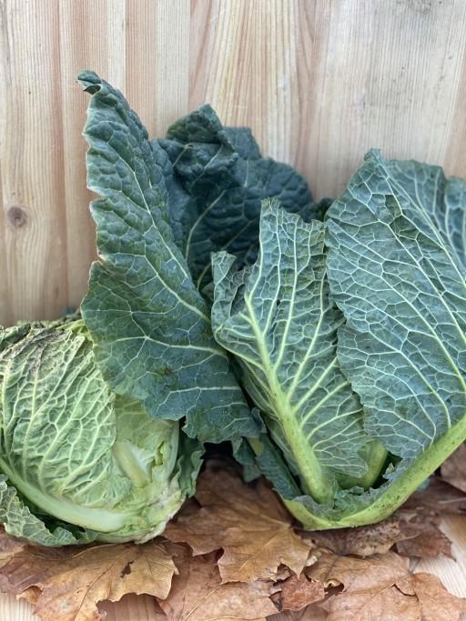 Green Cabbage.jpg