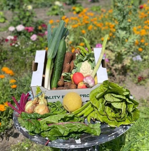 Veg + Fruit + Salad Large CROP.jpg