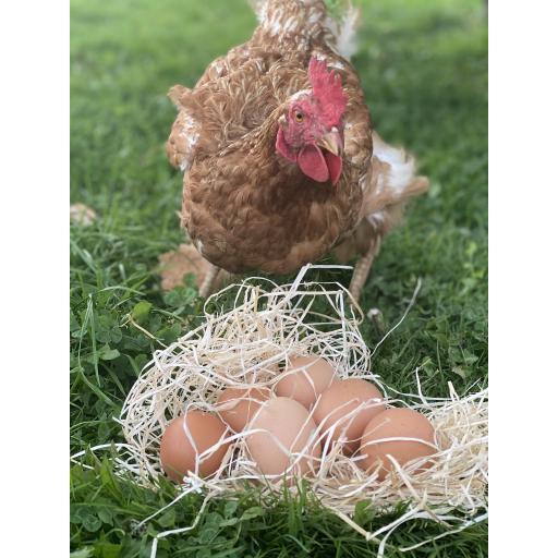 Organic Eggs 1/2 Dozen