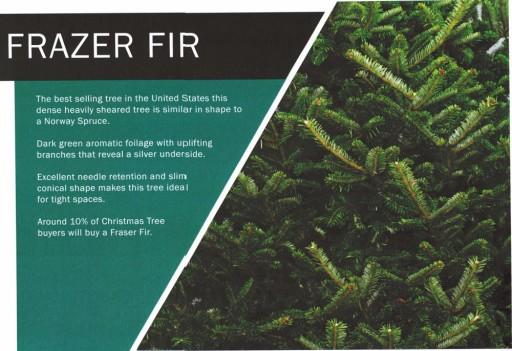 Frazer Fir 2.jpg